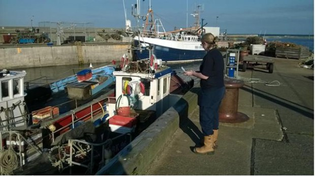 Seahouses harbor