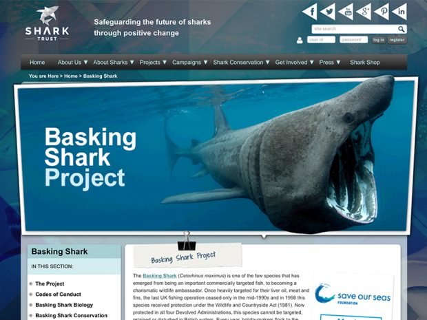 Basking Shark Project website