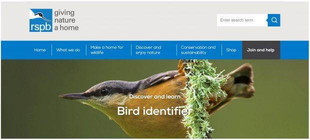 Bird identifier website