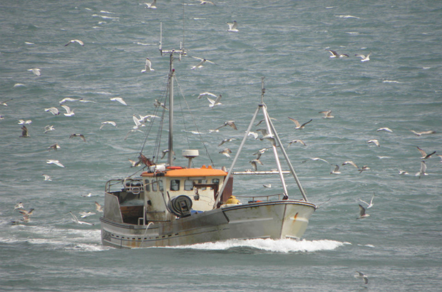 boat and sea birds catch quota trials