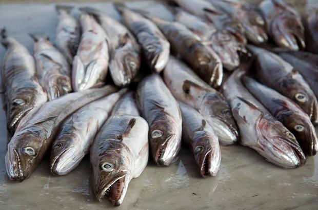 cod quota fish