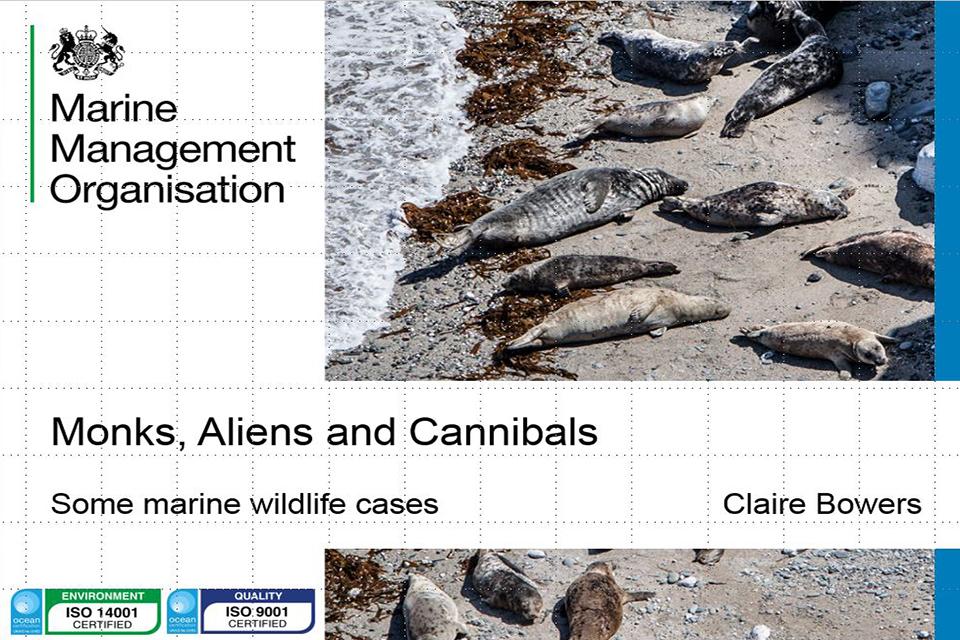 wildlife crime presentation slide