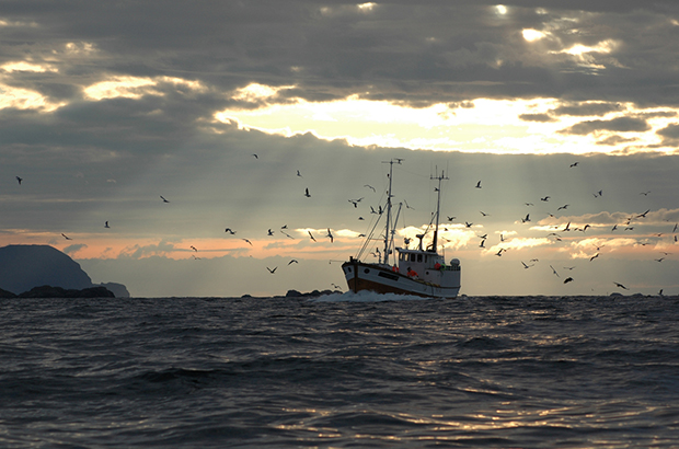 Seagulls following a trawler as the sun rises above the sea.