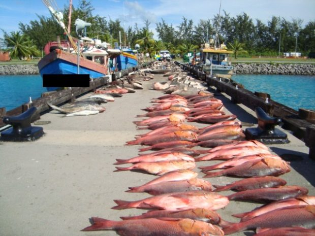 Rows of dead fish on a jetty that had been landed illegally.