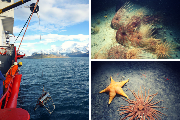 Image of the deep-water camera system. Images of sea lilies and two different types of starfish.
