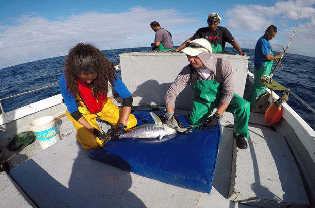 This image shows an image of Cefas staff showing tagging of tuna in progress.