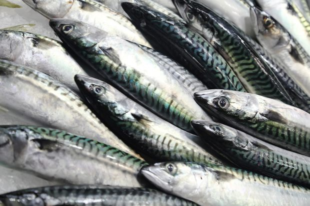 Fresh mackerel on the market