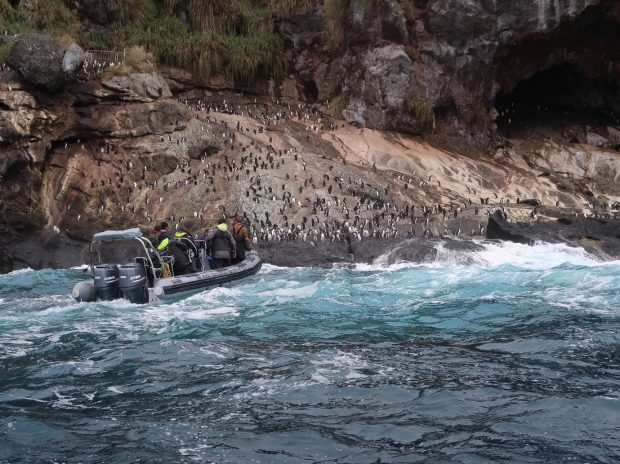Rigid inflatable boat approaching land on Nightingale Island, Tristan da Cunha.