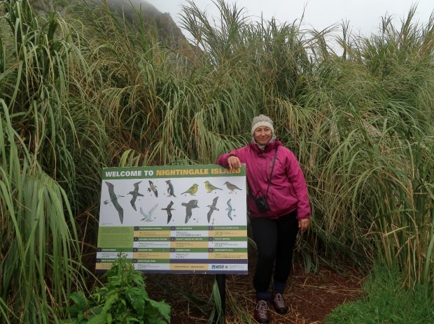 Ness Smith on Nightingale Island (in a hat knitted from St Helena wool!)