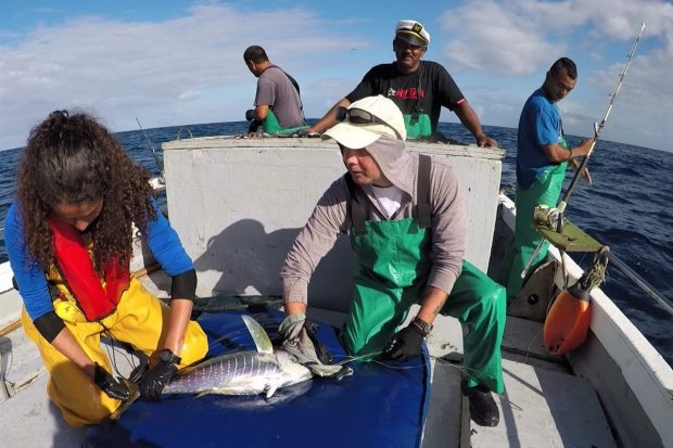 Blue Belt Programme scientist Serena Wright from Cefas works with St Helena fishermen to tag a tuna ready for release. St Helena fishers have now released over 1500 tagged tuna.